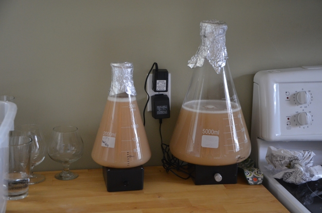 Two starters going. A 2L on the left of WLP090 for a Robust Porter, a 4.5L of WLP833 on the right for a Doppelbock.